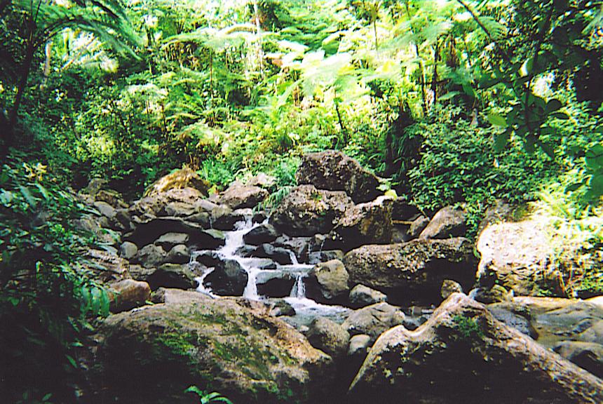 El Yunque S 4 Layers